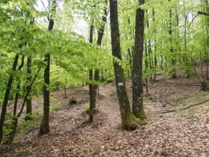 Προσωρινά αποτελέσματα του Sougliani Trail